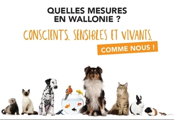 Brochure de vulgarisation du Code wallon du Bien-être animal