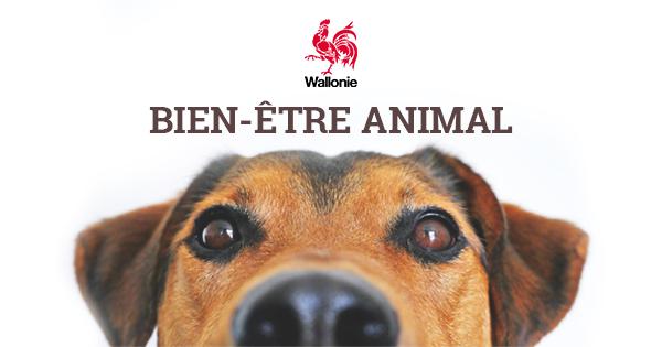 """Résultat de recherche d'images pour """"bien etre animal"""""""